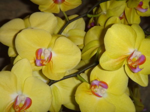 Spring Orchids